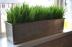 SPRiNG is in the air! I love opening up the doors & windows to let fresh air in, hearing t. Growing Wheat Grass, Soil Layers, Growing Gardens, Hollyhock, Potting Soil, Urban Farming, Organic Gardening, Indoor Gardening, Container Gardening