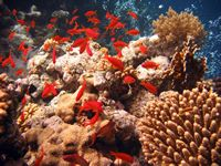 Dive the 7 Underwater Wonders of the World  *Red Sea  *Great Barrier Reef  *Galapagos
