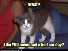 45 Of The Funniest Cats On The Internet