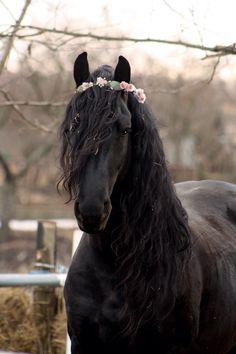 Flower crown mare. My edit.