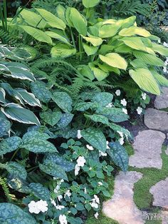 Some hosta flowers are very fragrant. Hostas are hardy in Zones Top Picks: 'Blue Mouse Ears' offers silvery-blue leaves and stays 1 foot wide; Best Perennials For Shade, Flowers Perennials, Small White Flowers, Lavender Flowers, Shade Garden, Garden Plants, Hosta Flower, Heuchera, Shade Plants