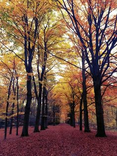 Autumn in Bilthoven Het Bos! We went here often. Loved that we could just walk there at anytime. It was a beautiful forest in Bilthoven
