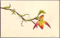 Contemporary Botanical Art - Susan Frei Nathan Fine Works on Paper -  CAROL WOODIN  Slipper Orchid, 2011 Watercolor on vellum 9 x 14 inches