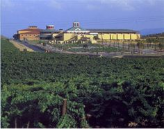 1000 images about bodegas la rioja on pinterest - Bodega dinastia vivanco ...