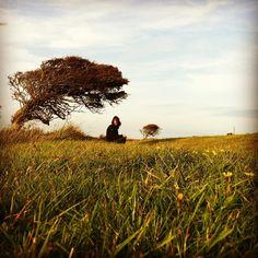 http://electroosmosisltd.co.uk  #tree #grass #meadow #athmosphere #wind…