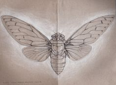 I've decided I need a cicada tattoo. I need to look up the body structure of the ones I used to hear in North Carolina in the summer.
