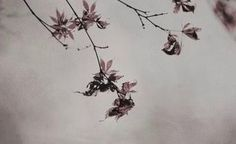 Mulberry Wine, Wind Rises, Autumn Trees, Great Love, Instagram, Vintage, Iphone Wallpapers, Boho Fashion, Nest