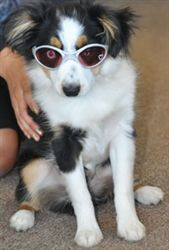 0902a12d6f3 K9 Optix Sunglasses for Dogs-Rubber Frames - Accessories - Sunglasses Posh  Puppy Boutique