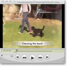 Free Dog Training Tip – Stop Your Dog Chewing The Leash Online Dog Training, Dog Training School, Dog Training Classes, Best Dog Training, Furry Tails, Puppy Classes, Natural Dog Treats, Aggressive Dog, Happy Puppy