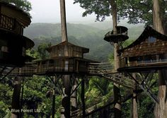 If you want to live in a treehouse all the time, there are ways to do it. Finca Bellavista Rainforest Village is a permanent community of treehouses at the base of a rain forest mountain in Costa Rica. The goal of the community is to preserve rain forest acreage and promote sustainable living arrangements.