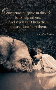 Inspirational Quotes:  Quote by Dalai Lama.