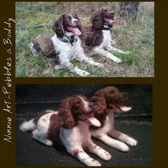 Needle Felted Dogs by Nikkie Art. Springers! :D