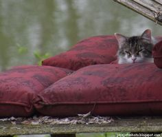 It's been almost 5 years since Mr. G made this Chaise from old fencing  from my previous home to set on the creek bank.     Recently I ha...