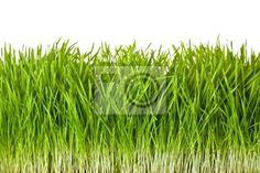 Vinilo green grass - suculento - follaje - crudo • PIXERS.es