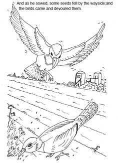 The Parable of the Sower Sunday School Lesson ~ Sunday School Ideas, craft and coloring pictures.