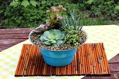 Succulent Garden - complete