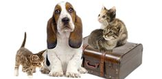 Whether your travel with your pet by air, land, or sea, PetTravel.com has been assisting pet owners with worldwide travel advice, pet friendly hotels, and the best products for 14 years.