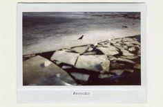 В Україні стартував фото-конкурс на екологічну тематику  http://ecotown.com.ua/news/V-Ukrayini-startuvav-foto-konkurs-na-ekolohichnu-tematyku-/  В Україні стартував фото-конкурс на екологічну тематику