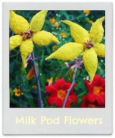 milkweed pod flowers  Twig and Toadstool: Summer Crafts