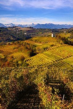 Vigneti in Piemonte, Italy