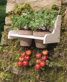 Machen Sie den hängenden Gärten von Babylon Konkurrenz. In diesem Kreativ-Kit Kräuterbeet Hängende Tomate wachsen oben Basilikum, Minze und Co., während unten saftige Tomaten reifen. Auch auf Balkonen eines der sieben Platzwunder.