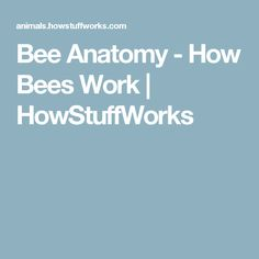 Bee Anatomy - How Bees Work | HowStuffWorks