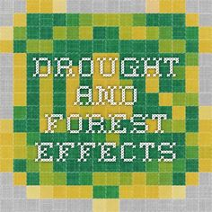 Drought and Forest Effects Web 1, Front Range