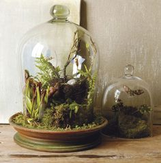 Making A Terrarium : Create Cool Decoration for Your Room by Making a Terrarium. Making A Terrarium. Mini Terrarium, Terrarium Cactus, How To Make Terrariums, Terrarium Table, Glass Terrarium Ideas, Terrarium Closed, Terrarium Centerpiece, Jar Centerpieces, Indoor Garden