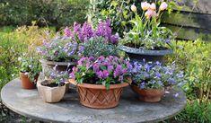 bloembollen in potten