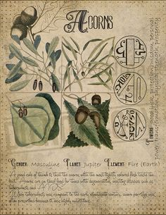 Magic plant knowledge has a long history and has a place in the modern witches Grimoire. Magic plant knowledge has a long history and has a place in the modern witches Grimoire. Magic Herbs, Herbal Magic, Plant Magic, Green Witchcraft, Magick Spells, Hedge Witchcraft, Witchcraft Books, Pagan, Wicca Herbs