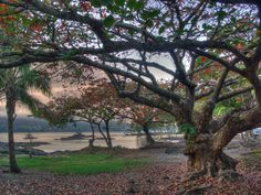 """""""On south Hilo Bay at the end of Banyan Drive is a wonderful park full of many species of interesting trees. On the left across the bay is Hilo City. On the center right through the trees is Coconut Island."""" - Dan Hagerman"""