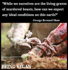 406 Best Animals Animal Rights Images Vegan Animals Vegan
