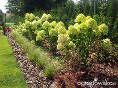 Moja codzienność - ogród Oli - strona 485 - Forum ogrodnicze - Ogrodowisko