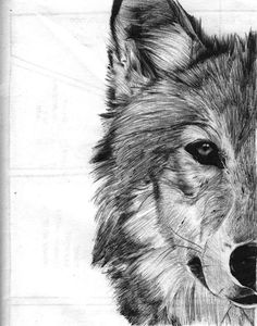 Wolf sketch by Shanita Lyn. Ballpoint pen in Moleskine. :)