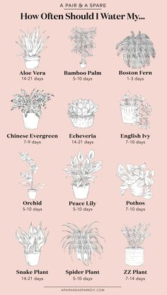 Often Should I Water My Plants? Sharing with you an illustrated guide on how much you should water the most common house plants.Sharing with you an illustrated guide on how much you should water the most common house plants. Plantas Indoor, Common House Plants, Cat Safe House Plants, House Plants Decor, Indoor House Plants, House Plants Air Purifying, Air Purify Plants, Outdoor Potted Plants, Ivy Plant Indoor