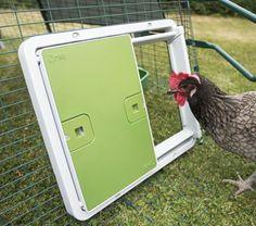 Autodoor on Mesh Chicken To Go, Chicken Runs, Clean Chicken, Automatic Chicken Coop Door, Light Sensor, Coops, Door Design, Four Seasons, Giveaway