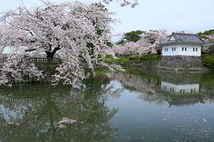 201:「4月9日に行ってきました。」@小田原城址公園