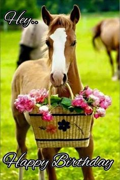 Happy Birthday Horse, Happy Birthday Greetings Friends, Happy Birthday Husband, Happy Birthday Flower, Cute Birthday Cards, Birthday Blessings, Birthday Wishes Funny, Singing Happy Birthday, Happy Birthday Messages