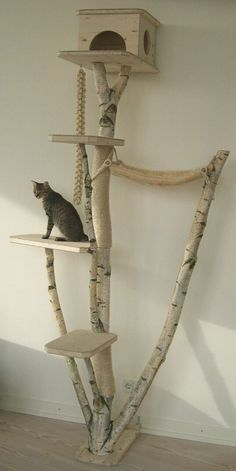 Love this kitty pad! My cat would love this, and we have this type of tree in our area.
