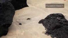 정선카지노후기 【W O W 7 7 8 C ㅇ M 】정선 카지노 후기 동영상https://vimeo.com/99711277,http://dai.ly/x20nk9v,http://youtu.be/cIXTUU4JuyA