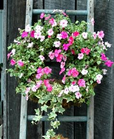 Looks like impatiens and ivy. Would love to hang this living wreath on the end wall of my front porch.