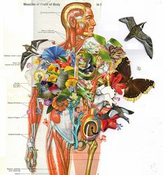 ANATOMICAL COLLAGE BY BEN GILES UK, Kingston-based artist Ben Giles (Tumblr / Society 6)