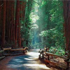 Muir woods, California, #USA