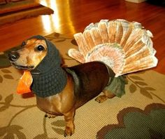 The Only Thanksgiving Dog Picture You Need To See Today...lolol...doesn't seem like the #dog minds, which would be my only concern :)