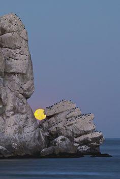 ˚Full Moon Set, Morro Rock & Pillar Rock - Morro Bay, California