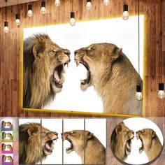 Designart 'Lion and Lioness Roaring' Animal Metal Wall Art