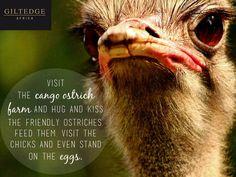 Garden Route | Cango Ostrich Farm