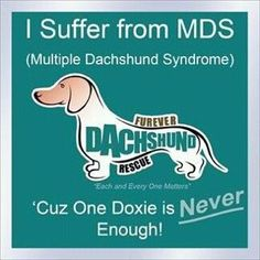 Multiple Dachshund Syndrome Dog quote   Pet quote   animal quote   Dachshund quote