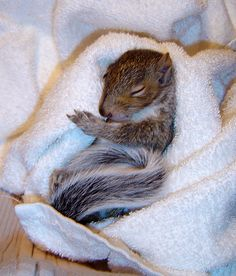 Orphaned Baby Squirrel by IsabellaNY on DeviantArt