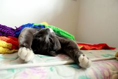 He and i feel the same way about mornings - http://cutecatshq.com/cats/he-and-i-feel-the-same-way-about-mornings/